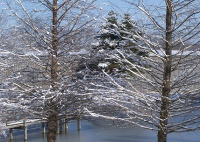calvary chapel of legrange vertical image of snow tree